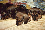 Gaby's puppies
